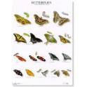 Vlinders 4