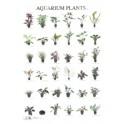 Aquarium Planten1