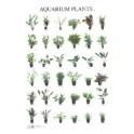 Aquarium Planten2