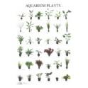 Aquarium Planten 4