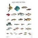 Aquarium Vissen 1