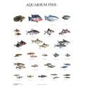 Aquarium Vissen 2