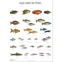 Aquarium Vissen 3